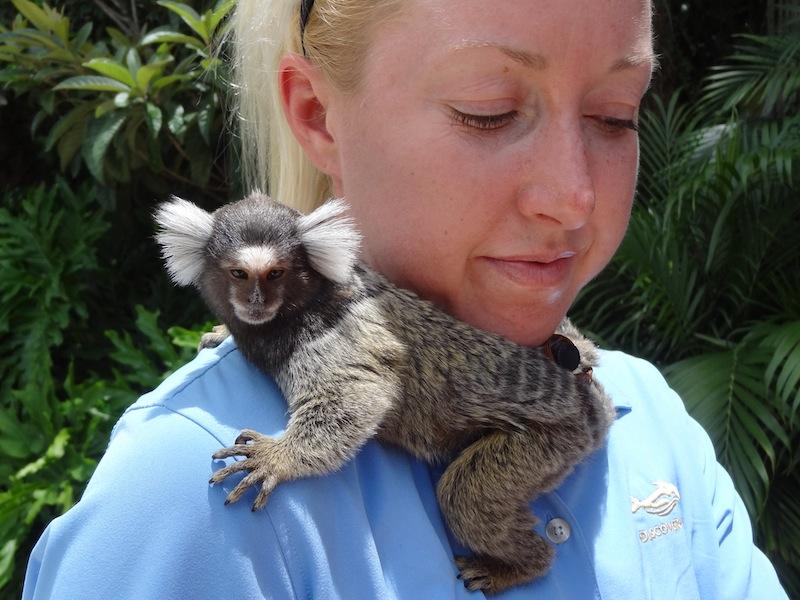 Adult marmoset monkeys | XXXPornbase  Adult marmoset ...
