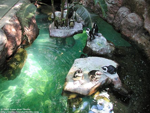 Photo Tr Dallas World Aquarium Theme Park Review