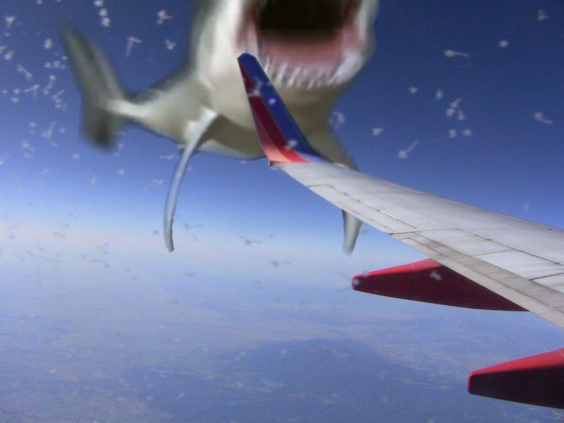 Shark attacks plane - photo#3