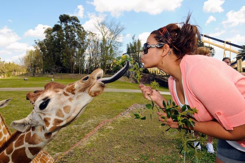 Busch Gardens Tampa Bay Bgt Bga Discussion Thread Page