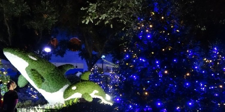Christmas at SeaWorld San Diego!