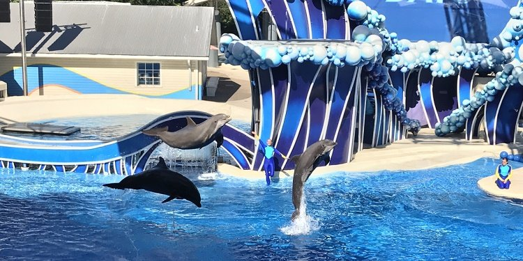 New Dolphin Days Show at SeaWorld Orlando!