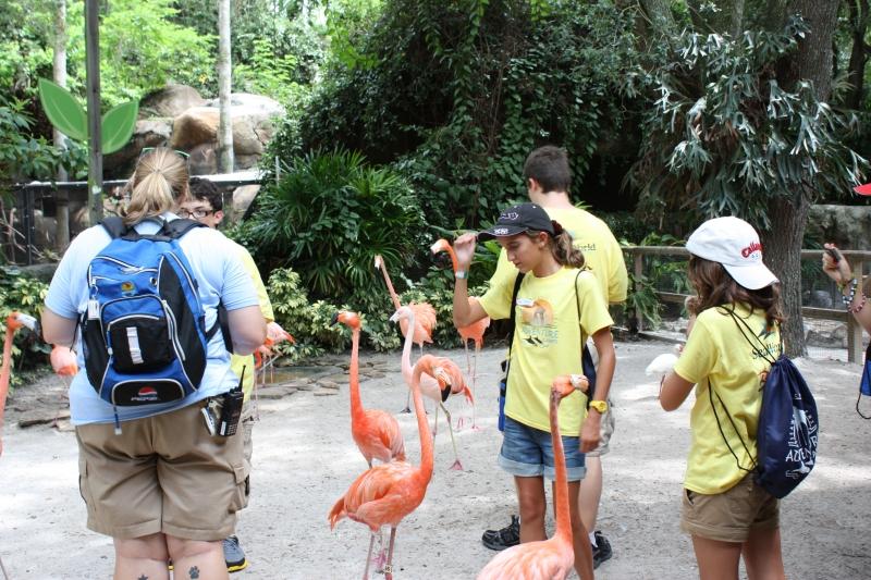 Theme Park Review Photo Tr Busch Garden S Adventure Camp
