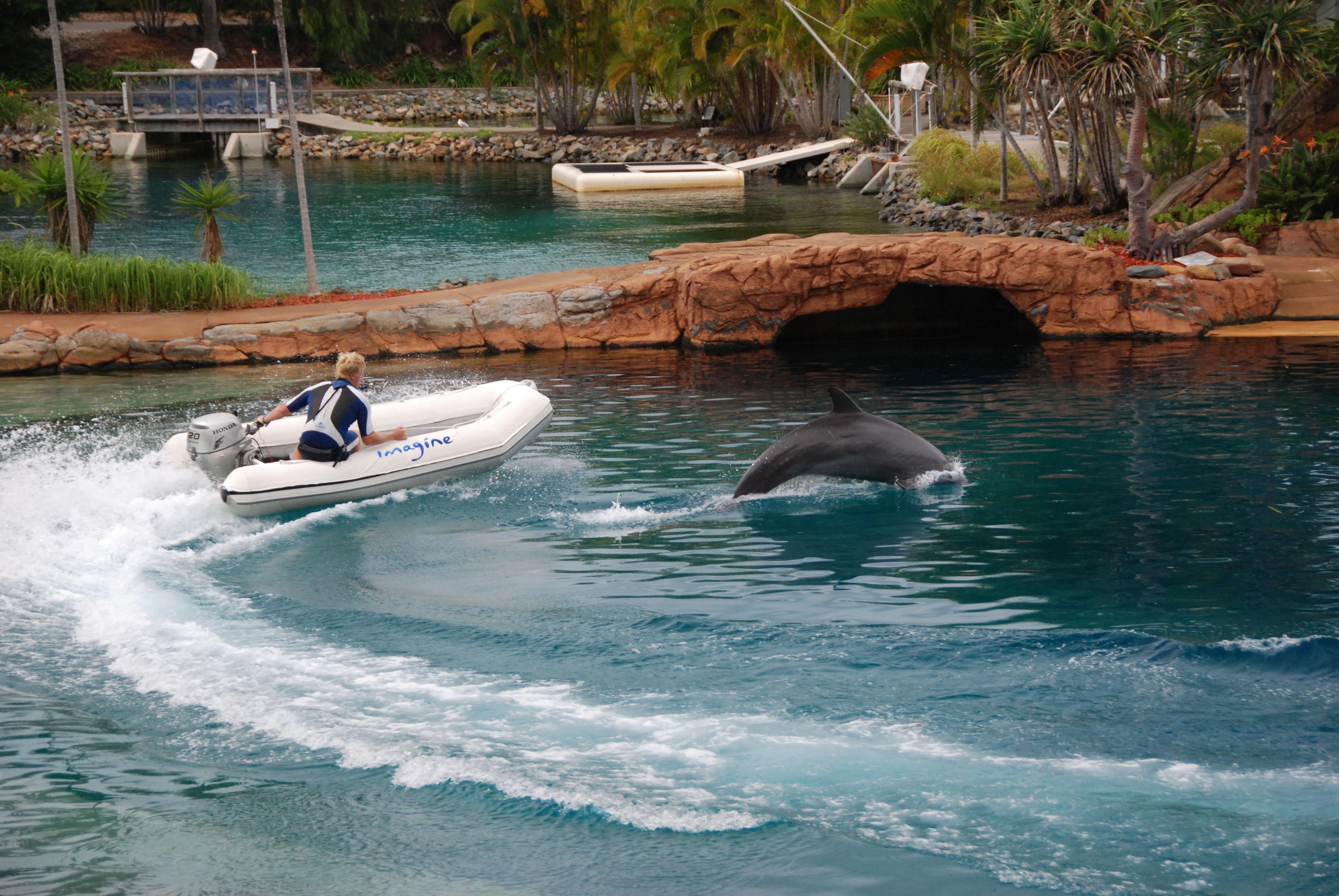 Sea World Australia Photos Videos Reviews Information