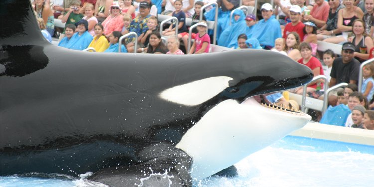 SeaWorld Phases Out Shamu Show